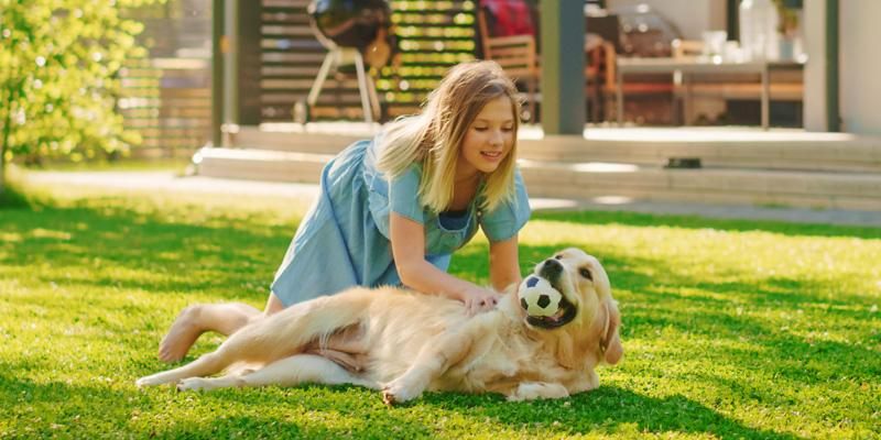 A young girl playing with her golden retriever in their flea-free backyard